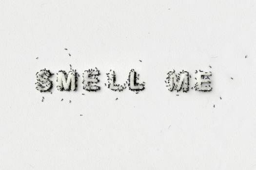 """""""Smell me, touch me, kiss me"""" - Christine Kettaneh"""